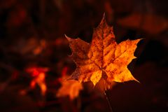 Autumn leaves close up on dark background.  Stock Image