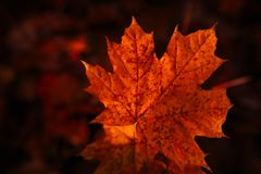 Autumn leaves close up on dark background.  Stock Photography