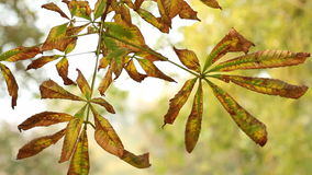Autumn leaves close up nature. Background stock video footage