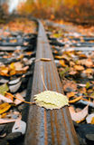 Autumn leaves close up. On an old rail Stock Photo