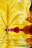 Autumn Leaves Close Up Reflecting in Water Ripples royalty free stock image