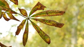 Autumn leaves close up stock video
