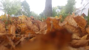 Autumn Leaves Close-up Stock Photography