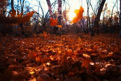 Autumn leaves close up on sun background Royalty Free Stock Photography