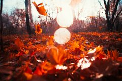 Autumn leaves close up on sun background Stock Photography