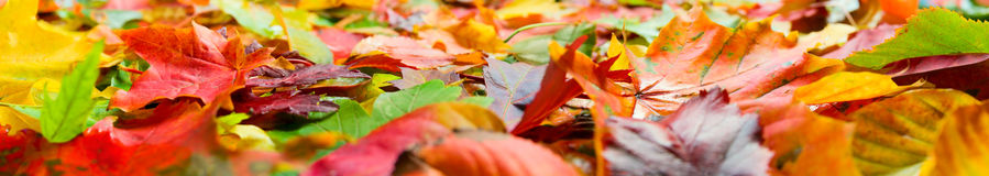 Autumn leaves closeup Royalty Free Stock Photos