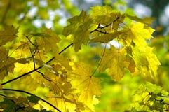 Autumn Leaves. Closeup of colorful autumn leaves Stock Photo
