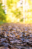 Autumn Stock Photography