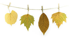 Autumn leaves on a clothes line Royalty Free Stock Photo