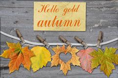 Autumn leaves with clothes-peg Royalty Free Stock Photos