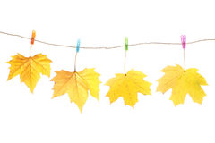 Autumn leaves and clothes pegs Royalty Free Stock Photo