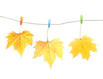 Autumn leaves and clothes pegs Stock Photos