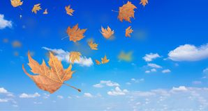 Autumn winter background leaves wind weather Royalty Free Stock Image