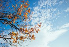 Autumn leaves with cloudy blue sky Stock Image