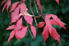 Autumn leaves. In cloudy evening Royalty Free Stock Photo