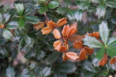 Autumn leaves. In cloudy evening Royalty Free Stock Photography