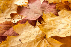 Autumn leaves coarsely Stock Image