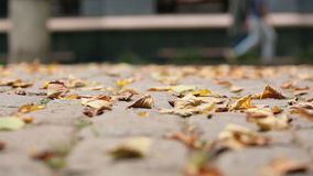 Autumn leaves on cobbles. Shooting video below stock video
