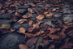 Autumn leaves on cobblestone road stock images
