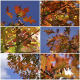 Autumn leaves collage Stock Image