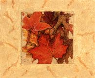Autumn leaves collage Stock Photography
