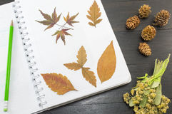 Autumn leaves collage on the notebook Stock Image