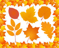 Autumn leaves collection. Autumn leaves in maple leaves frame,  vector illustration Stock Images