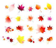 Autumn leaves collection royalty free illustration