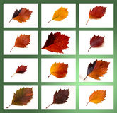 Autumn leaves collection Royalty Free Stock Images