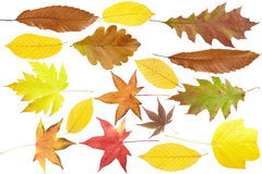 Autumn Leaves Collection Royalty Free Stock Image