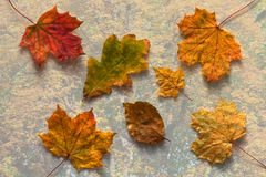 Autumn leaves collection Stock Photos