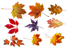 Autumn leaves - collection Stock Image