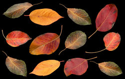 Autumn leaves collection on black Stock Photos