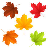 Autumn leaves. Collection of color autumn leaves royalty free illustration