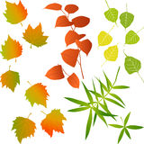 Autumn leaves, collection for designers Royalty Free Stock Photo