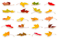 Autumn leaves collection Stock Images