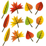 Autumn leaves collection illustration. Collection of colorful autumn leaves on white background illustration royalty free illustration