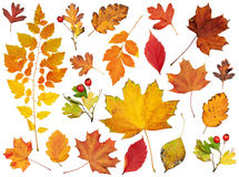 Autumn leaves collection, object set isolated on white Royalty Free Stock Photos