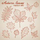 Autumn leaves collection set Royalty Free Stock Image