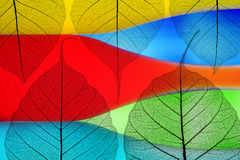 Autumn leaves on a color background. Autumn leaves on a multi-colored background Stock Photography
