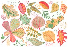 Autumn leaves by color pencil on white background. Falling leaf crayon hand-drawn illustration. Yellow red leaf clipart. Autumn leaves by color pencils on white royalty free illustration