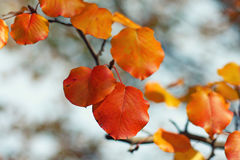 Autumn leaves color Stock Images