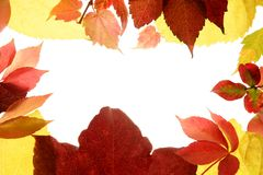 Autumn leaves color still, studio white background Stock Photography