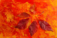 Autumn leaves on colored background. Autumn leaves on red and yellow background Stock Photo