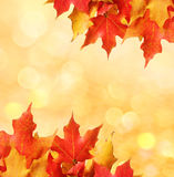 Autumn leaves. Colored Maple leafs over bokeh. Stock Images