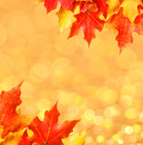 Autumn leaves. Colored Maple leafs over bokeh. Stock Image