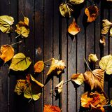 Autumn leaves. Autumn colored leaves on wooden deck Royalty Free Stock Images