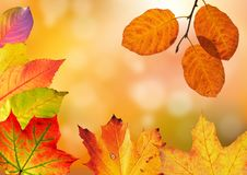 Autumn, Leaves, Colorful Stock Photo