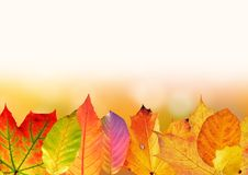 Autumn, Leaves, Colorful Stock Images