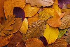 Autumn Leaves Colorful Background. Autumn Concept Wallpaper. Stock Photos
